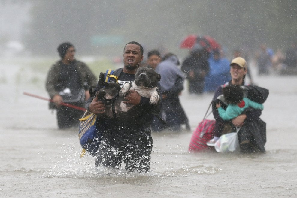 Texas, quando l'amicizia sfida l'uragano Harvey i cani messi in salvo