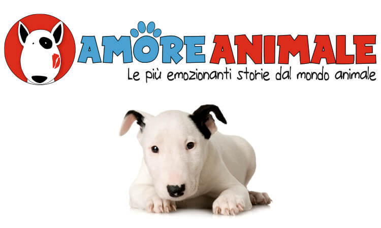 amore animale